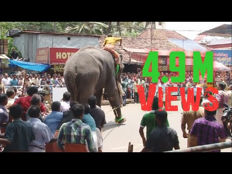 Elephant in KeralaTemple Festival HD Video