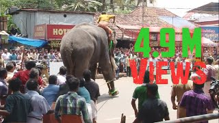 Фото Elephant In KeralaTemple Festival HD Video