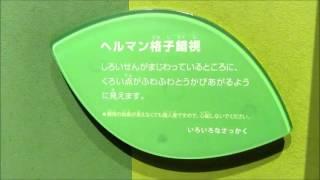 名古屋市科学館、ヘルマン格子錯視
