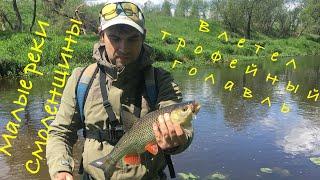 Влетел трофейный голавль на спиннинг на малой реке Рыбалка на голавля на спиннинг