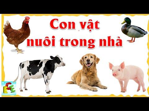Dạy bé học các con vật nuôi trong nhà gia đình   tiếng kêu và hình ảnh động vật   ECE 1