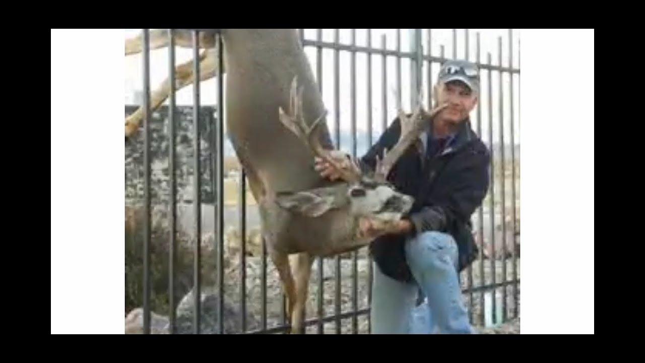 Amazing Deer rescue 😭|dopu hub|