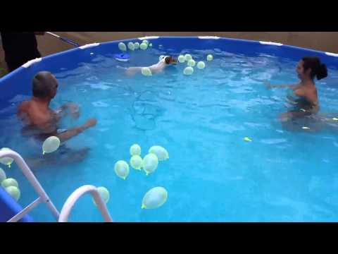 Dog pops balloons in pool