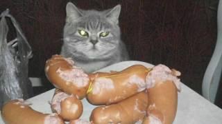 Смешной стишок про кота!