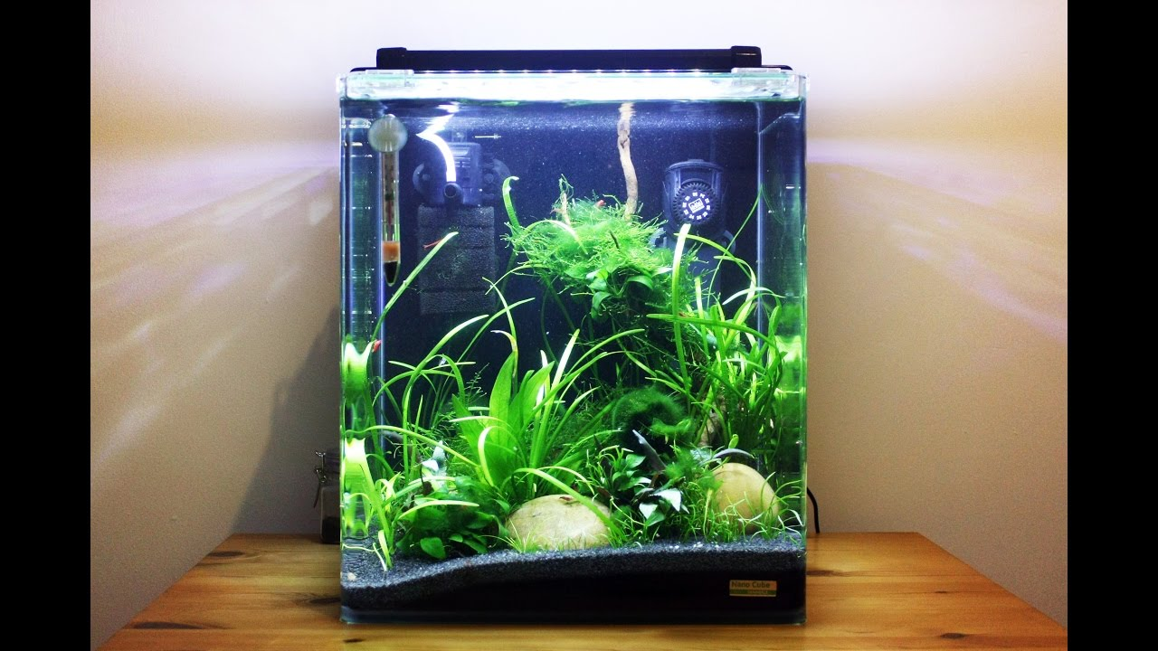 Dennerle Nano Cube Shrimp Tank Progression Thermometer Original For Aquascape Aquarium