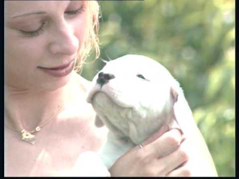 The Argentine Mastiff - Pet Dog Documentary English