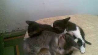 My kitties (Music: Bobby Mcferrin - Good Lovin