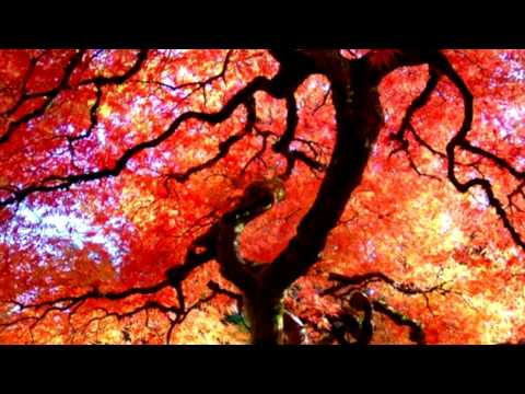 Relax Buddhism Meditation Music~Zen Garden~ Mind and Body ~Feng Shui~1