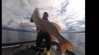 Gros Brochet GEANT de 130,5 cm en grand Lac #ILLEX DEXTER SHAD #LOWRANCE HDS 12GENIII