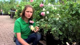 Садовый центр «Дарвин» предлагает садовые растения по акции. 07.2014(Осень уже не за горами и ею хочется насладиться сполна. Поможет в этом садовый центр