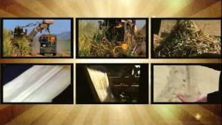 Sugarcane - Paddock to plate (for kids & big kids)
