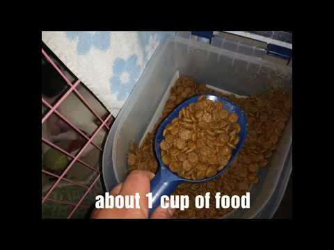 How To Feed 5 Week Old Puppies