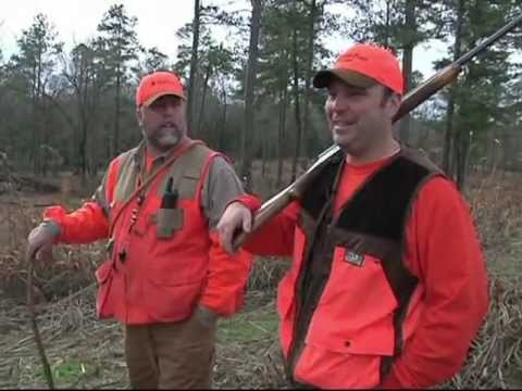 Quail Hunt At Edisto Pines