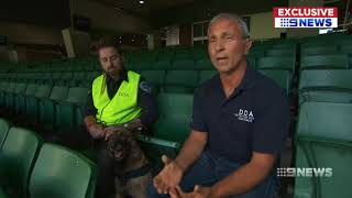 Detector Dogs Australia Channel 9 News