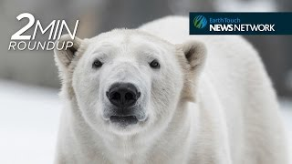 Pelican fishing lessons, blue whale demolition & a bacon-loving polar bear