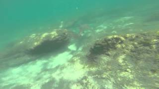 Snorkeling Bathtub Beach Stuart Florida..SHARK