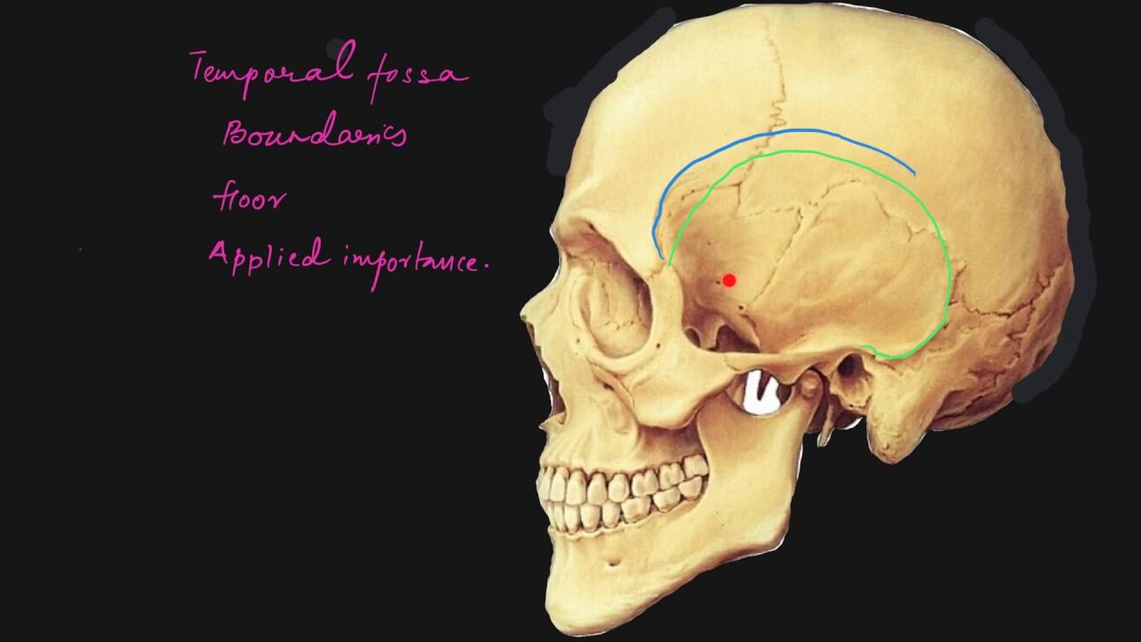 Temporal fossa explained - YouTube