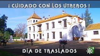 Traslado de novillos utreros de Prieto de la Cal   Toros desde Andalucía