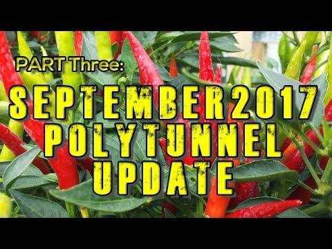 Chilli Polytunnel Vlog Update September 2017 'TOTAL DEVASTATION'