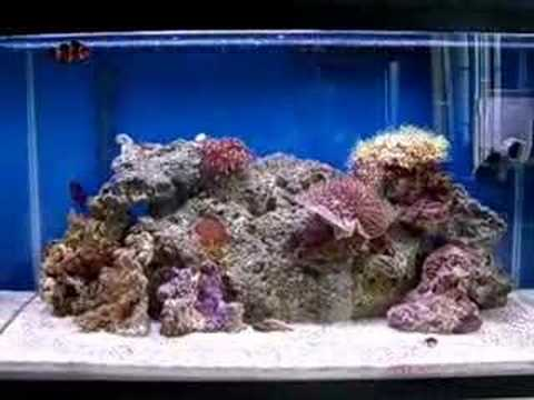 Nano reef 10 gallon april 2007 youtube for Saltwater fish for 10 gallon tank