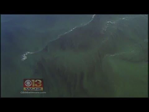 Weather Stretches Chesapeake Bay's 'Dead Zone'