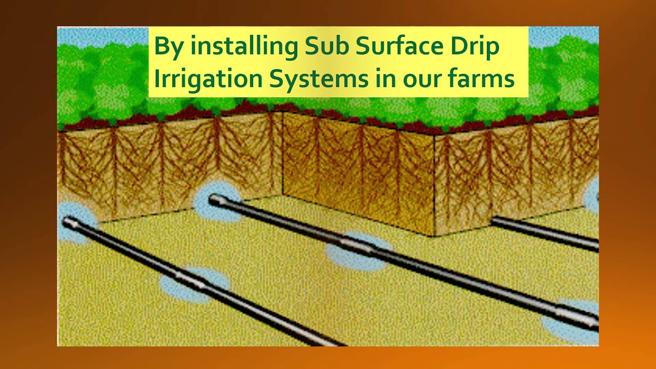 Psa Subsurface Drip Irrigation Method Youtube