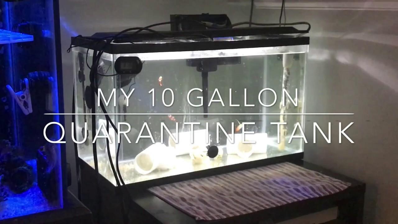 Image result for quarantine tank