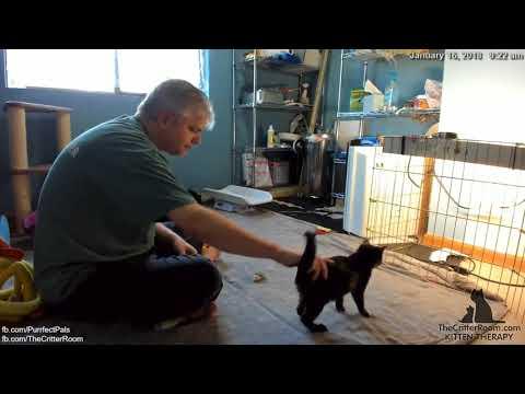 Mew Year's Kittens - Before Work Kitten Check 2018-01-16
