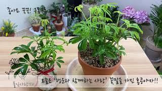 플랜테리어 새집증후군 물리치는 홍콩야자 풀잎사랑tv