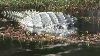 REFUGE Alligator River Trailer