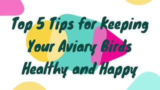 Top 5 Tips for Keeping Your Aviary Birds Healthy and Happy. How to Take Care of a Biirds