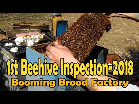 First Beehive Inspection Of 2018 / Things To Look For