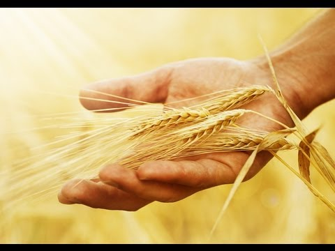 Natural Health Tip #6 - Eat Sprouted Grains