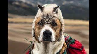 犬と猫の喧嘩!?じゃれているだけ?つい笑っちゃう仲良し動画2