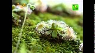 Растения. Учебный фильм
