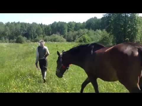 Животные/Обработка,защита от летающих насекомых