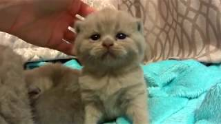 Милые Котята ПЕРВЫЙ РАЗ  гуляют. Умилительное видео. .