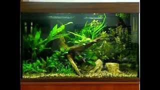 new-Aqua - (Three Weeks) оформление и обслуживание аквариумов(, 2014-09-26T07:52:03.000Z)