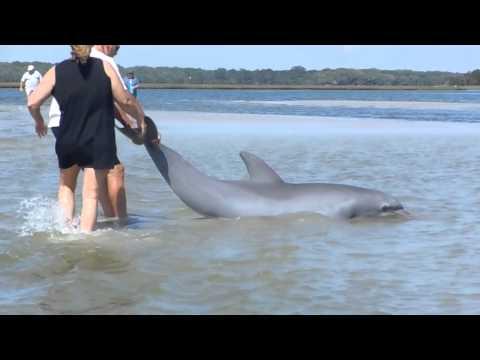 Dolphin Rescue Jacksonville, FL