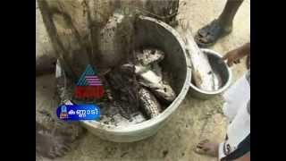 """""""Fish farming in Wayanad""""- Kannadi 2,June 2012 Part 3"""