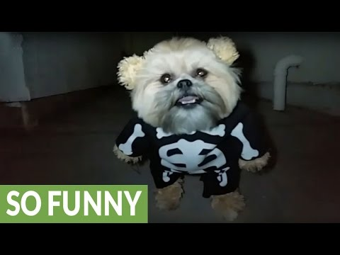 Munchkin the Teddy Bear's skeleton costume