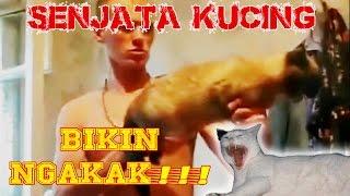 Video Kucing Lucu Terbaru 2015 | Senjata Kucing Bikin NGAKAK!!!