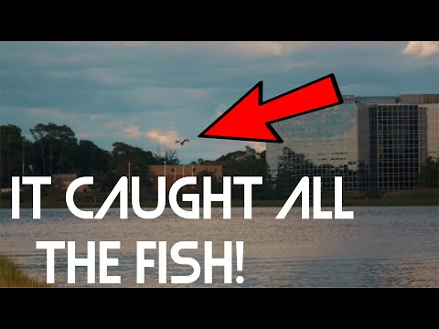 The Birds Caught Everything!! (Boston Fishing)