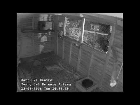 Barn Owl Centre's Live Nature Cam
