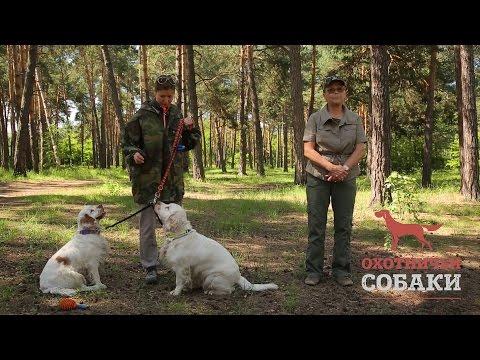 Охотничьи собаки. 21 серия. Кламбер-спаниель