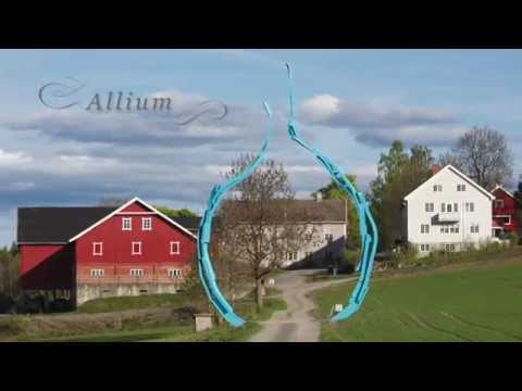 Løken - Allium - Kapp