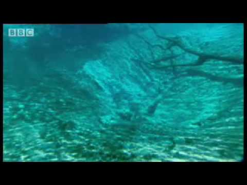Flooded Caves: Underwater Florida - Wild New World - BBC History