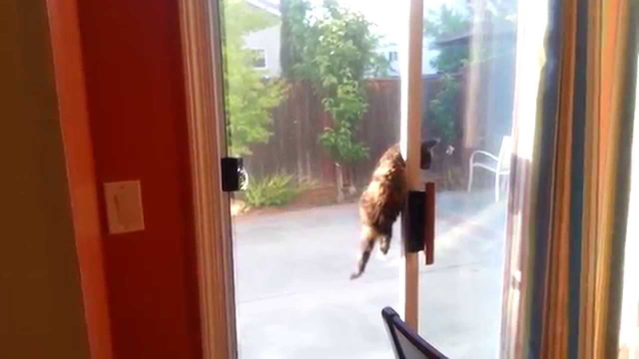 how to train a kitten to go outside