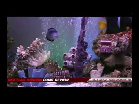 Fish center live youtube for Live fish online