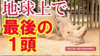 地球上で最後の一頭となったオスのキタシロサイの画像が物語る『絶滅』